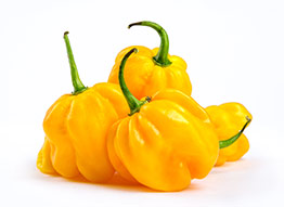 Gele peper